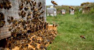 أقوى دورة تكوينية في تربية النحل بطريقة علمية