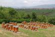 أقوى تكوين تطبيقي في تربية النحل